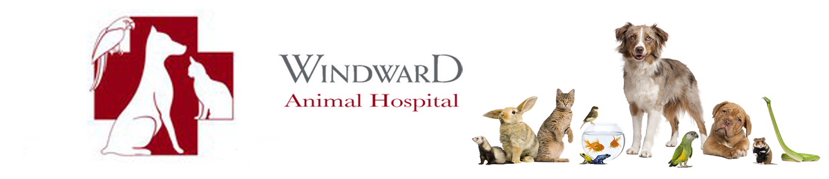 Windward Animal Hospital